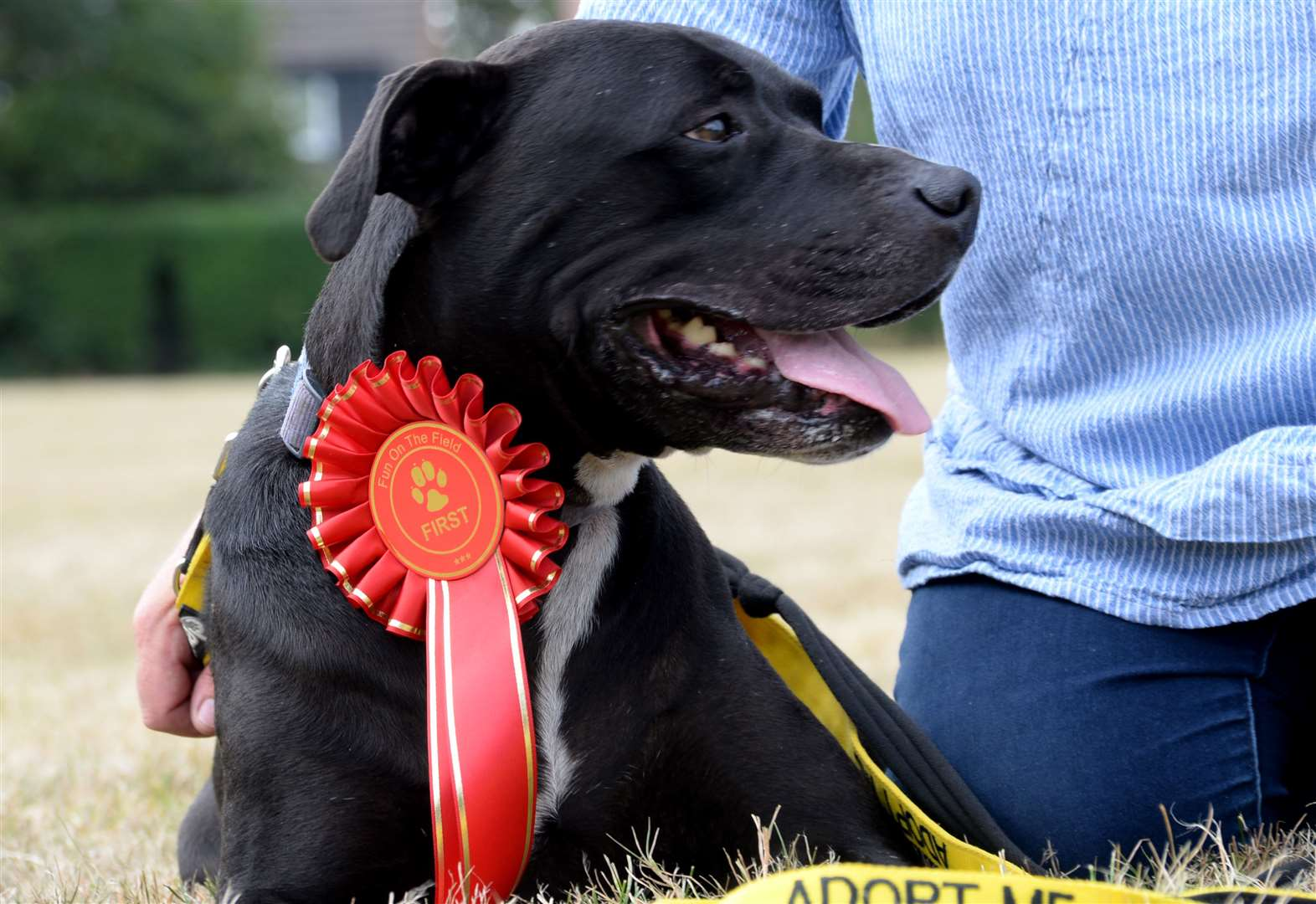 Homeless dog Magic wins Sawbo's heart - and Best in Show - at the Fun on the Field family day and dog show