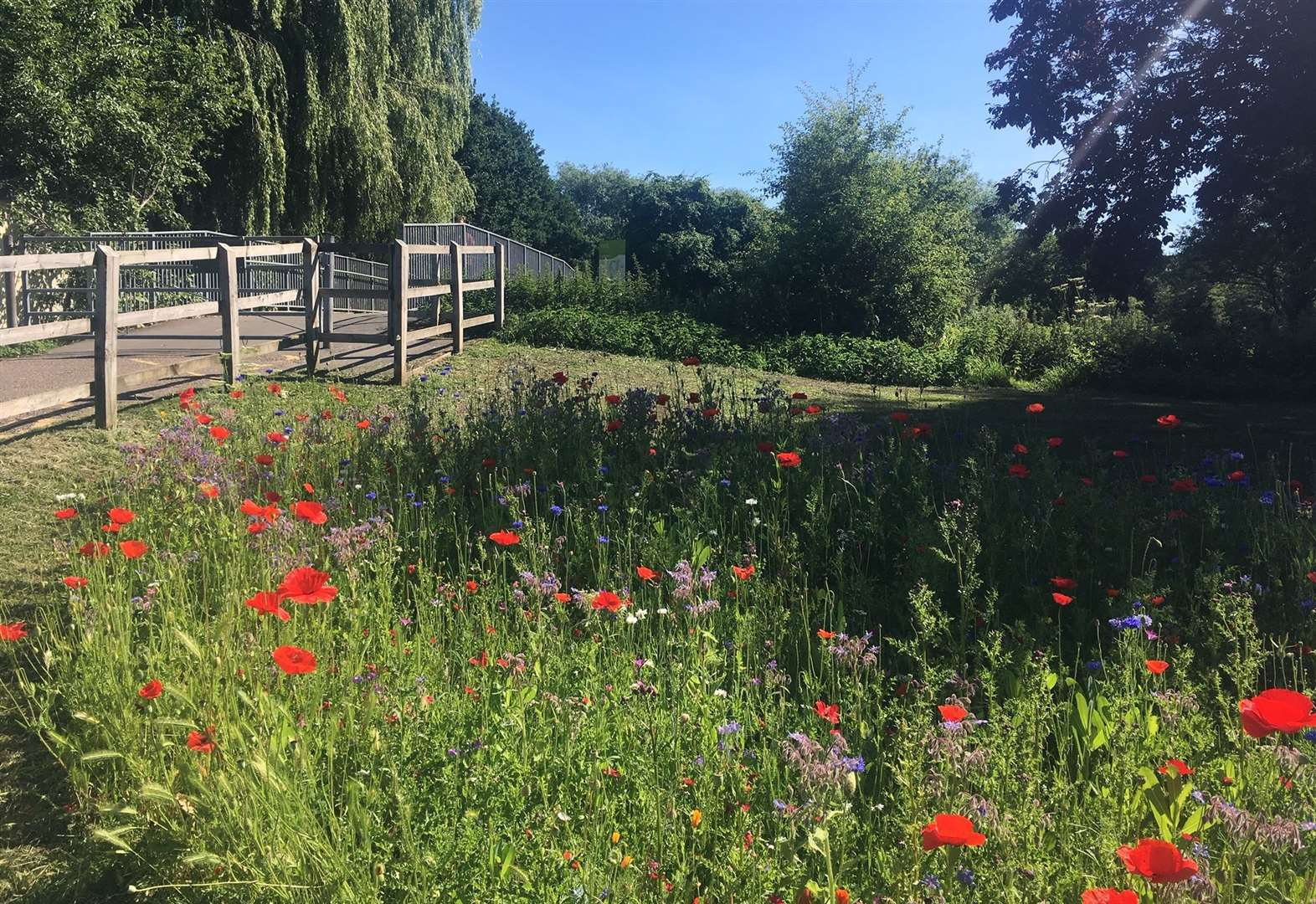 Council to trial bee-boosting wildflower roadside verges in Herts