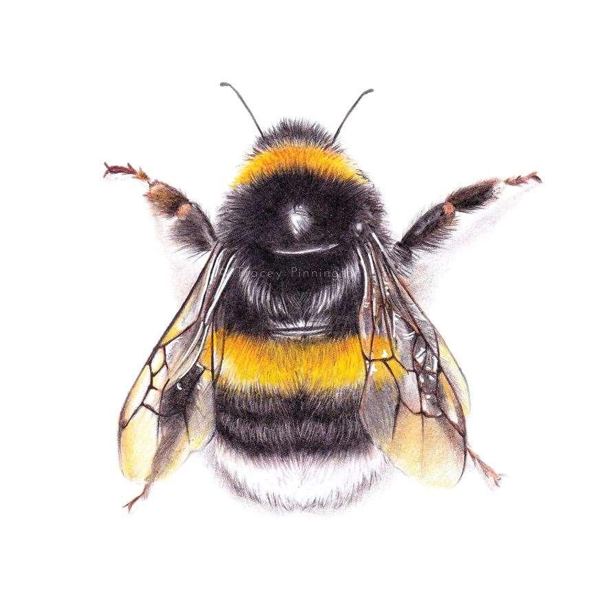 Bee. Tracey Pinnington FOR WEB (33556978)