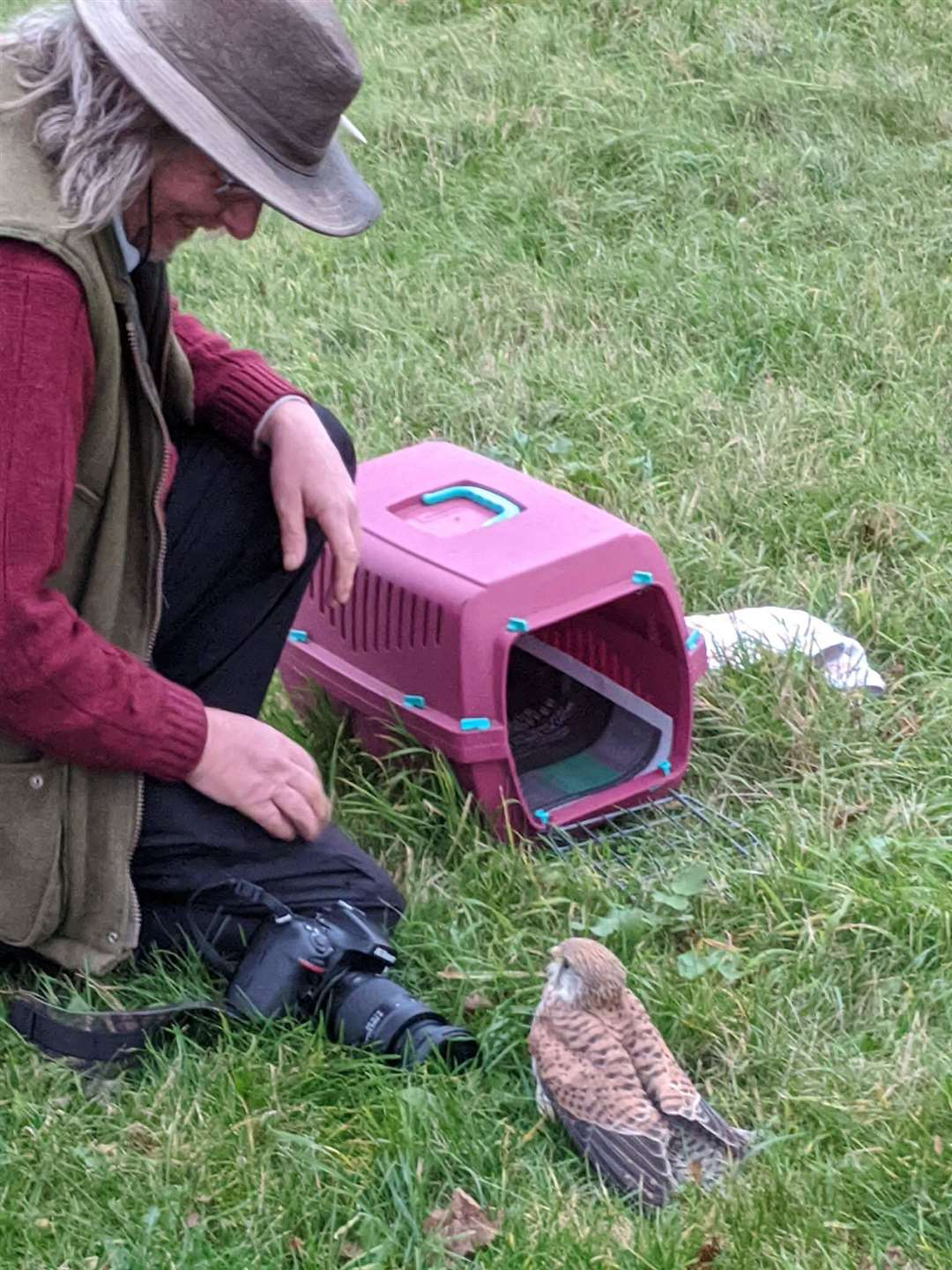 Jono releases the kestrel back into the wild at Ash Valley Golf Club, a week after rescuing it (43222279)