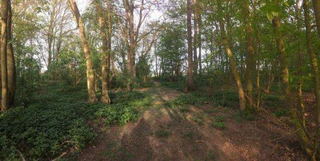 There will be nature trails through the ancient woodlands at PoshLots