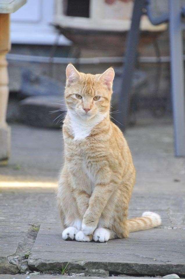 Jono's cat Norman (32875612)