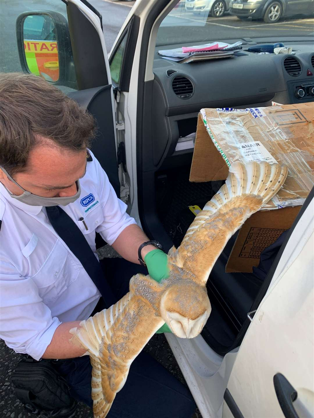 Barn owl rescue at Stansted Airport (42723338)