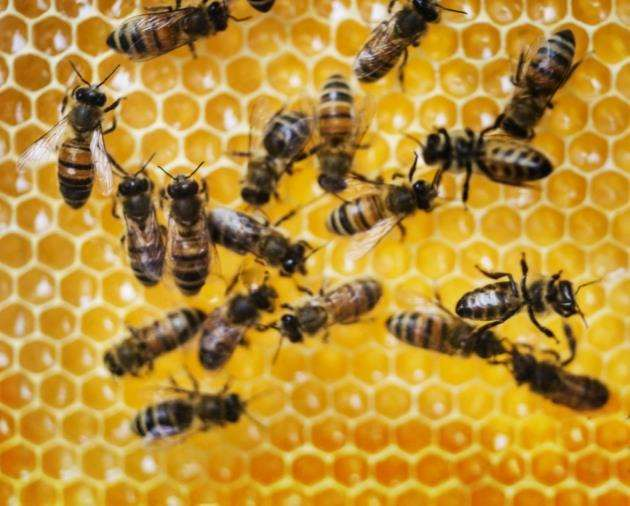 Cammas Hall Fruit Farm hosts a talk about keeping honeybees on Saturday