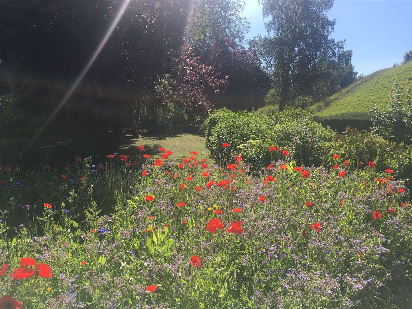 The wildflower patch at the Link Road entrance to Castle Park (23367352)