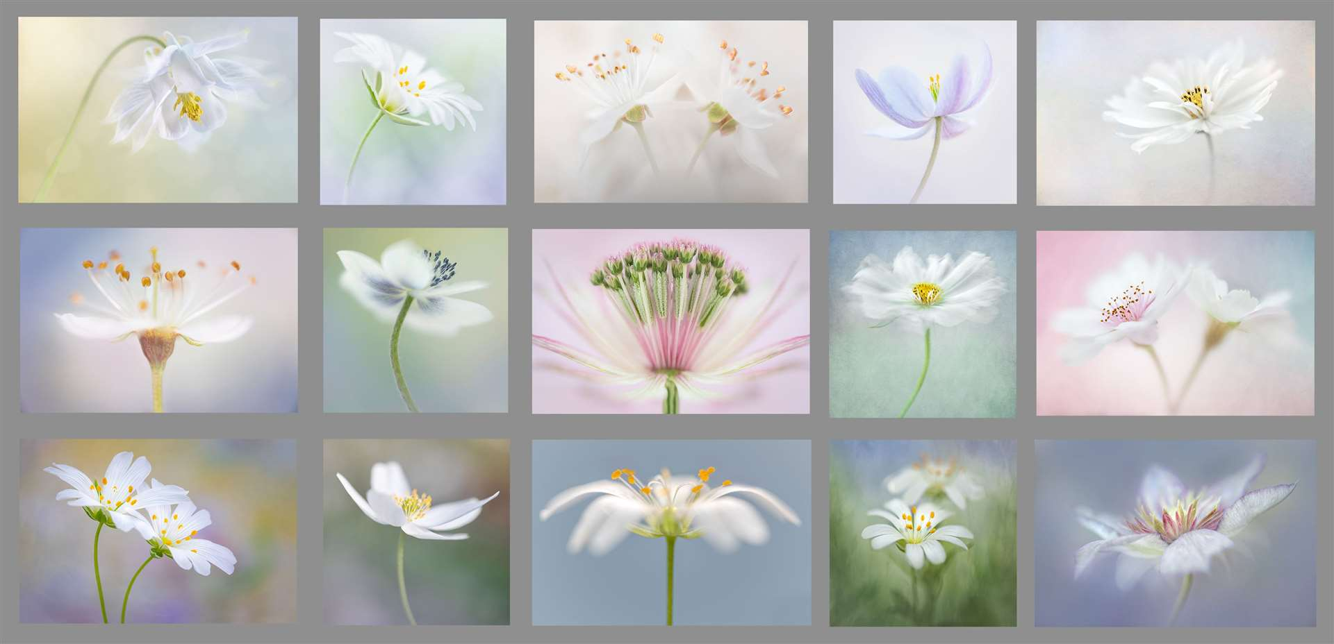 The panel of 15 photos on the theme of white flowers by Bishop's Stortford Camera Club member Sophia Spurgin (46781859)
