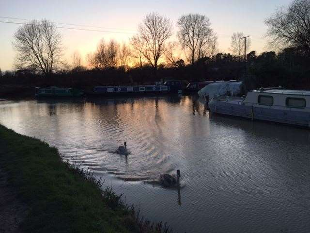 Swans at Southmill Lock on the River Stort at dusk on Christmas Eve by Mariko Ward, of Bishop's Stortford